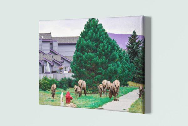 Elk 1, 24x36 canvas